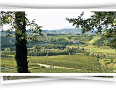 Livon wijngaarden