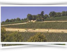 Italiaanse-wijnen-uit-De-Marken