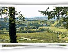 Livon uit Friuli